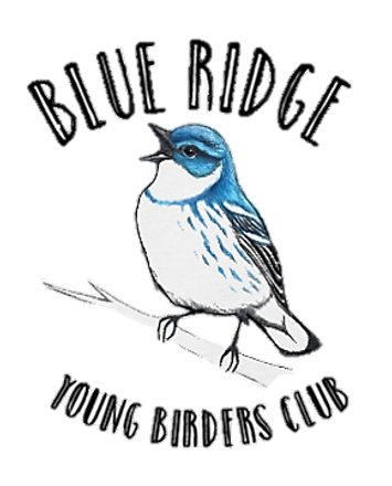 Blue Ridge Young Birders Club Cerulean logo