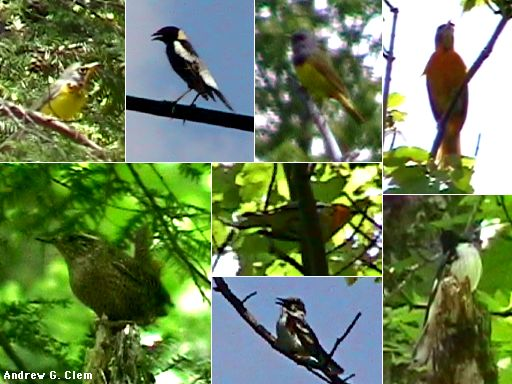 Highland County bird montage