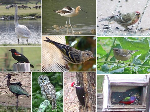 ABC bird montage small